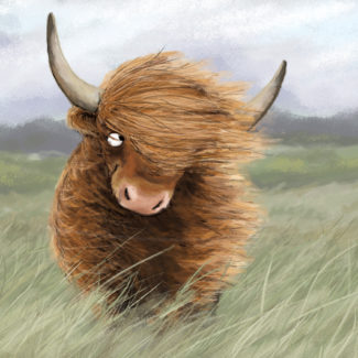 Highland cattle in wind