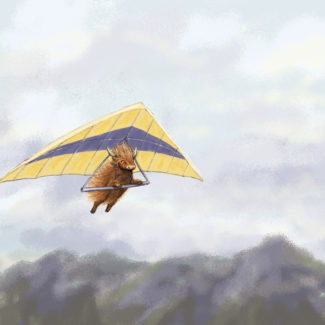 Highland cow hang gliding